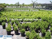 Review of Common Pests of Ornamental Plants