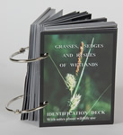 Grasses, Sedges and Rushes of Wetlands Identification Deck