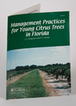 Management Practices for Young Citrus Trees in Florida