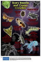 Scary Insects and Creepy Crawlies Poster