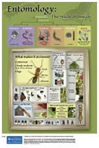 Entomology: The Study of Insects