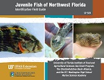 Juvenile Fish of Northwest Florida
