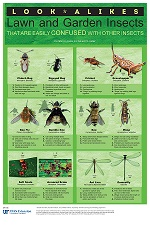 Look-alikes: Lawn and Garden Insects