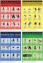 Look-alikes Entomology Posters