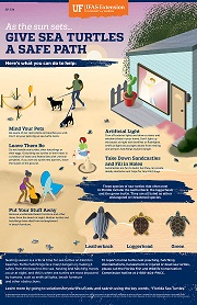 Give Sea Turtles a Safe Path poster
