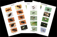 Household Insects ID Sheets