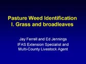 Pasture Weed Identification I - Grass and Broadleaves