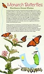 Monarch Butterflies: Northern Great Plains