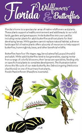 Florida Wildflowers and Butterflies brochure