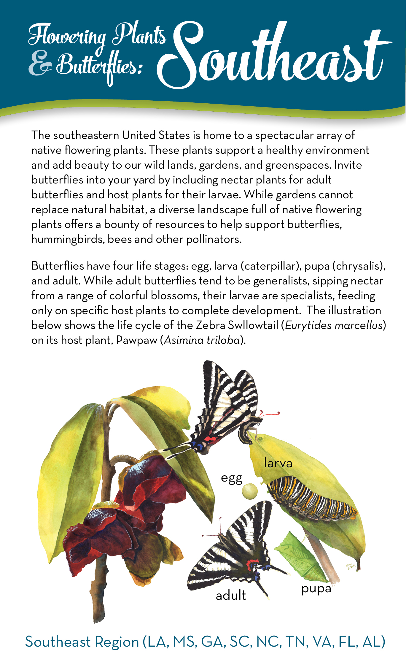 Flowering Plants and Butterflies of the Southeastern US brochure