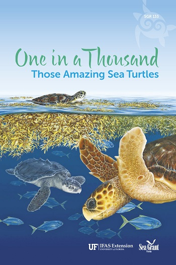 Sea turtles book