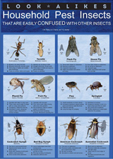 Look-alikes Household Pest Insects