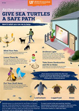 Give Sea Turtles a Safe Path