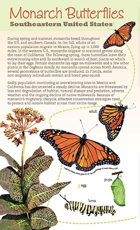 Monarch Butterflies: Southeastern United States brochure