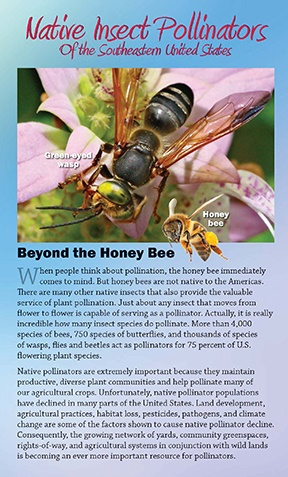 Native Insect Pollinators of the Southeastern US brochure